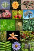 Conférence : La vie amoureuse des plantes.
